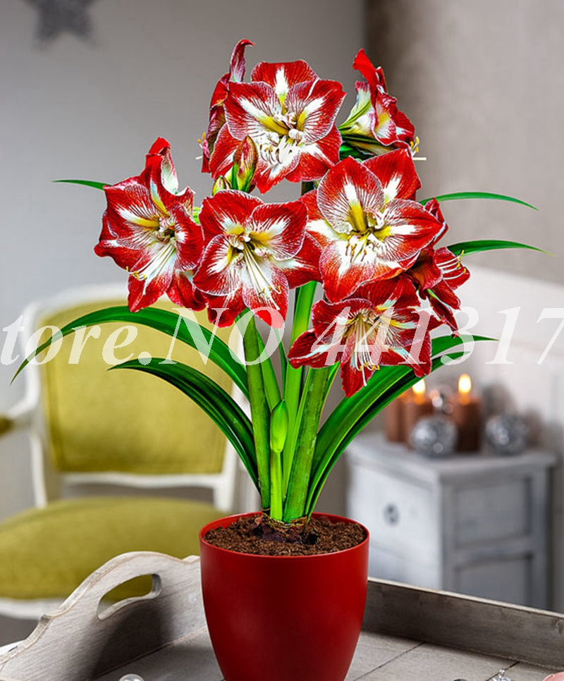 100 Pcs/ Bag Exotic Amaryllis Cheap Chinese Flower Plant Barbados Lily Potted Balcony Flower For Home Garden Pot Supply Planting