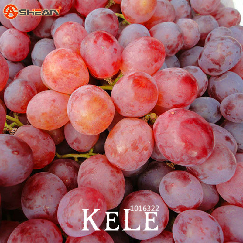 Big Promotion!100 PCS/Lot Sweet Red Grape Bonsai Advanced Fruit Flores Natural Growth Grape Delicious Gardening Fruit Plants,#65