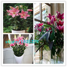 Elegant Beauty 100 Head PU Artificial Calla Lily Bridal Bouquet Decorations Restaurant Home Office New