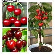 10 pcs/bag cherry  mini tree organic fruit bonsai super sweet food plant pot for home garden
