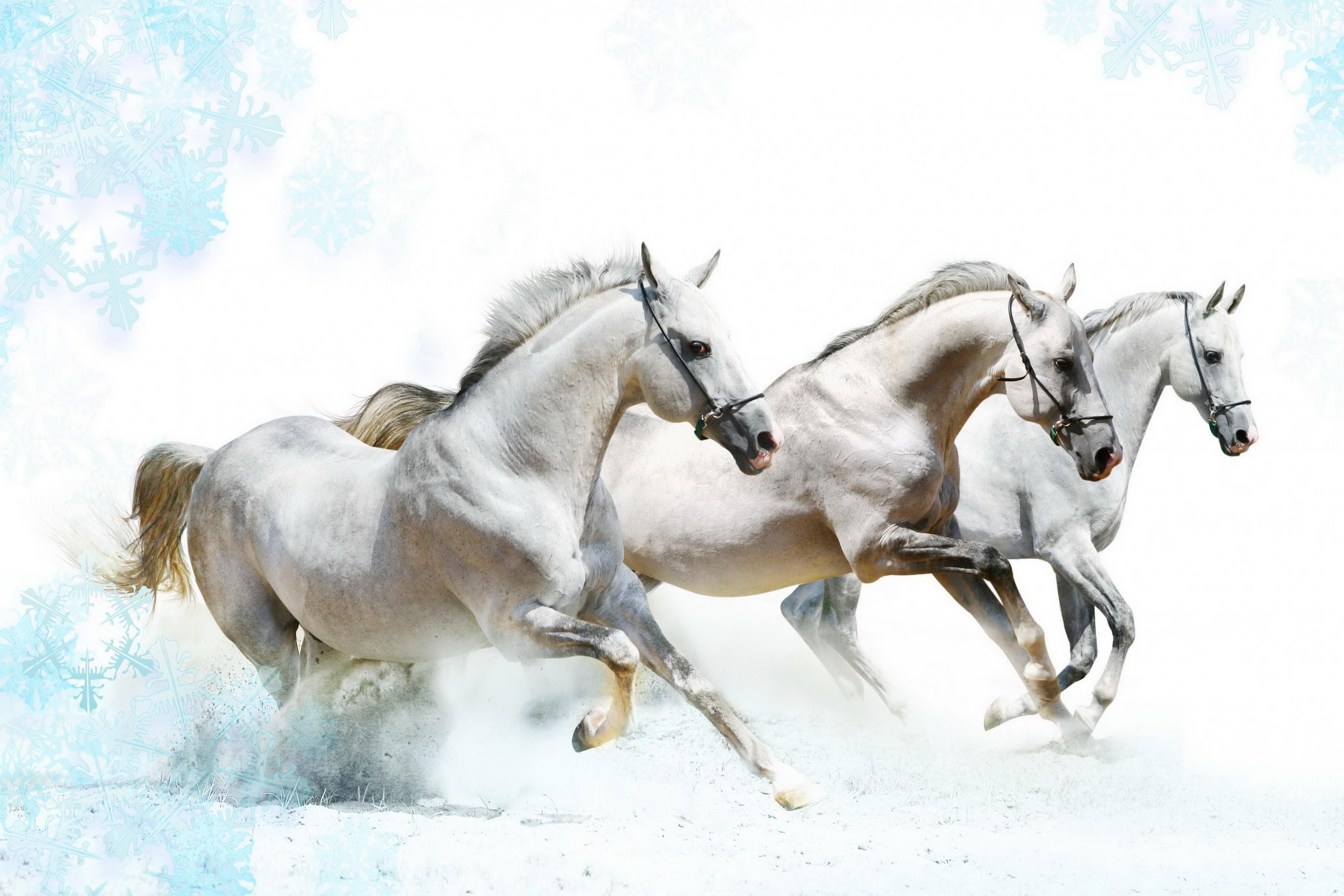 home decoration horses running horse water splash silk fabric poster