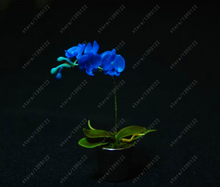 100 Pcs/bag rare Mini Orchid Seeds phalaenopsis orchid Indoor Miniature garden bonsai flower seeds orchid Pot home garden plant