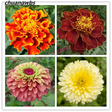 100 Pcs Potted flower plant marigold flower beautiful family flower for home garden bonsai стоимость