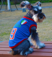 הגעה כלב החדשה לחיות מחמד בגדי כלב אפוד חולצה חולצה אביב קיץ דלי דלי זהב Satsuma אנגלית כלב טובגו ספורט