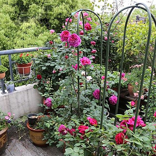 Hot Sale Climbing Rattan Plant Holder U Shaped Green Vines Flower Rack  Adjustable Growing Plants Stand Rack