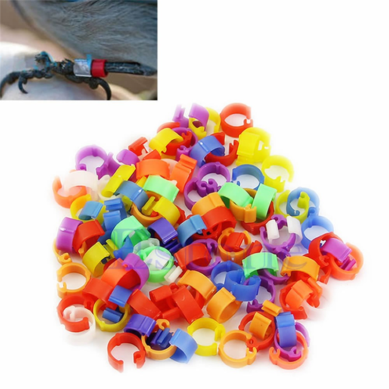 100pcs Chicken Hen Pigeon Leg Poultry Dove Bird Chicks Duck Parrot Clip Rings Band Foot Ring