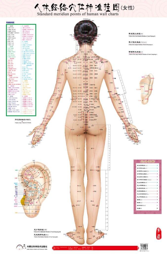 Berühmt Weibliche Organ Anatomie Fotos - Menschliche Anatomie Bilder ...