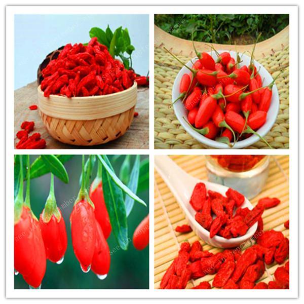 2000 Pcs Red Goji Berry Outdoor Wolfberry Organic Heirloom Fruit For Garden Diy Lycium Chinense Herb Plant Benefit Medlar