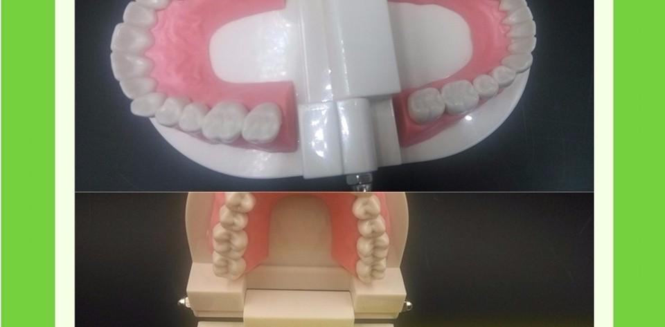 Teeth Model0000013