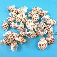 Natural Beach Sea Shells Decoration Organic Conch Concha Craft for Fish Tank Aquarium Nautical Decor Diy Handicraft Accessories