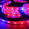 5M LED Grow Lights DC12V Growing LED Strip 5050 IP20 IP65 IP68 Plant Growth Light For