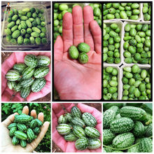 20pcs Thumb watermelon plants fruit flores sweet mini watermelon easy-growing Bonsai for home garden decoration(China)