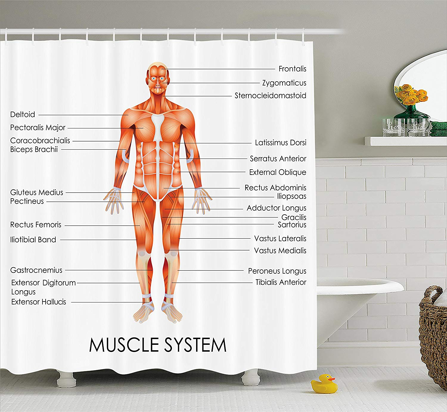 Human Anatomy Shower Curtain Muscle System Diagram Of Man Body Features Biological Elements Fabric Bathroom Decor Set With Hooks In Curtains From