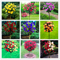 100pcs/bag rose tree rose bonsai flower tree Chinese roses 18 colors give lover plant for home garden