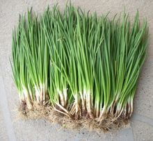 200pcs/bag small green onion seeds, Organic heirloom seeds vegetables, heathy Kitchen cooking food plant pot or bonsai seeds