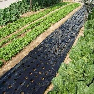 Image 3 - Película plástica para mantillo agrícola, película de cultivo de plantas vegetales, invernadero, mantener el calor, antihierba, película perforada de PE, color negro, 5 agujeros, 5 ~ 50m