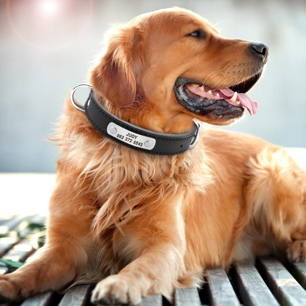 collier gros chien personnalisé cuir