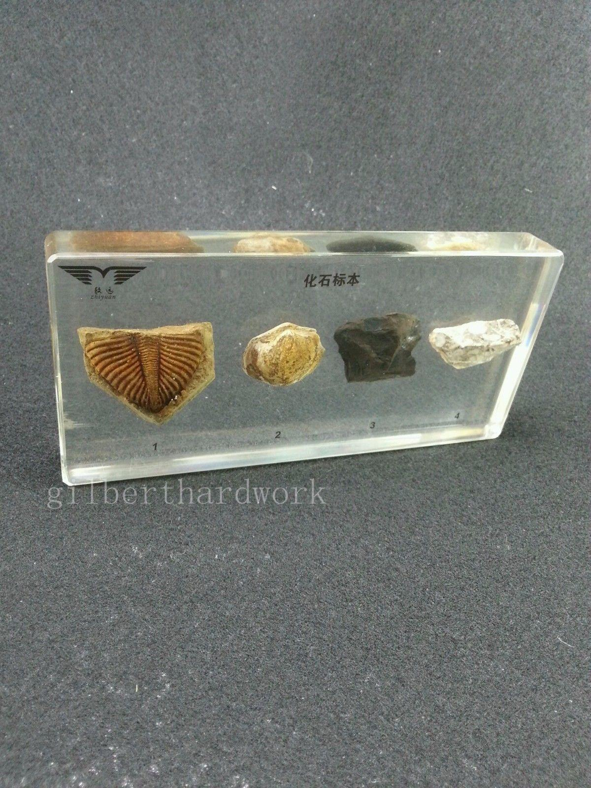 4 Kinds Of Fossil Specimens In Clear Lucite Block Educational Instrument Specime fishbone fispecimens in clear lucite block educational instrument middle school biology school teaching aids