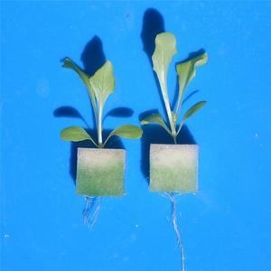 Image 5 - Square Sponge Soilless Hydroponics Garden Propagate Germination Container Planting Pot Bean sprouts Nursery Seedling Sponge Pot
