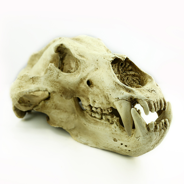 g015 resin halloween skull decoration resin animal skulls bear skulls top supplier commercial halloween decorations - Commercial Halloween Decorations