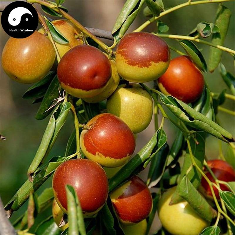 Sweet chair Holland Papaya 100 graines Papaya Fruits Graines Thai plante jardin