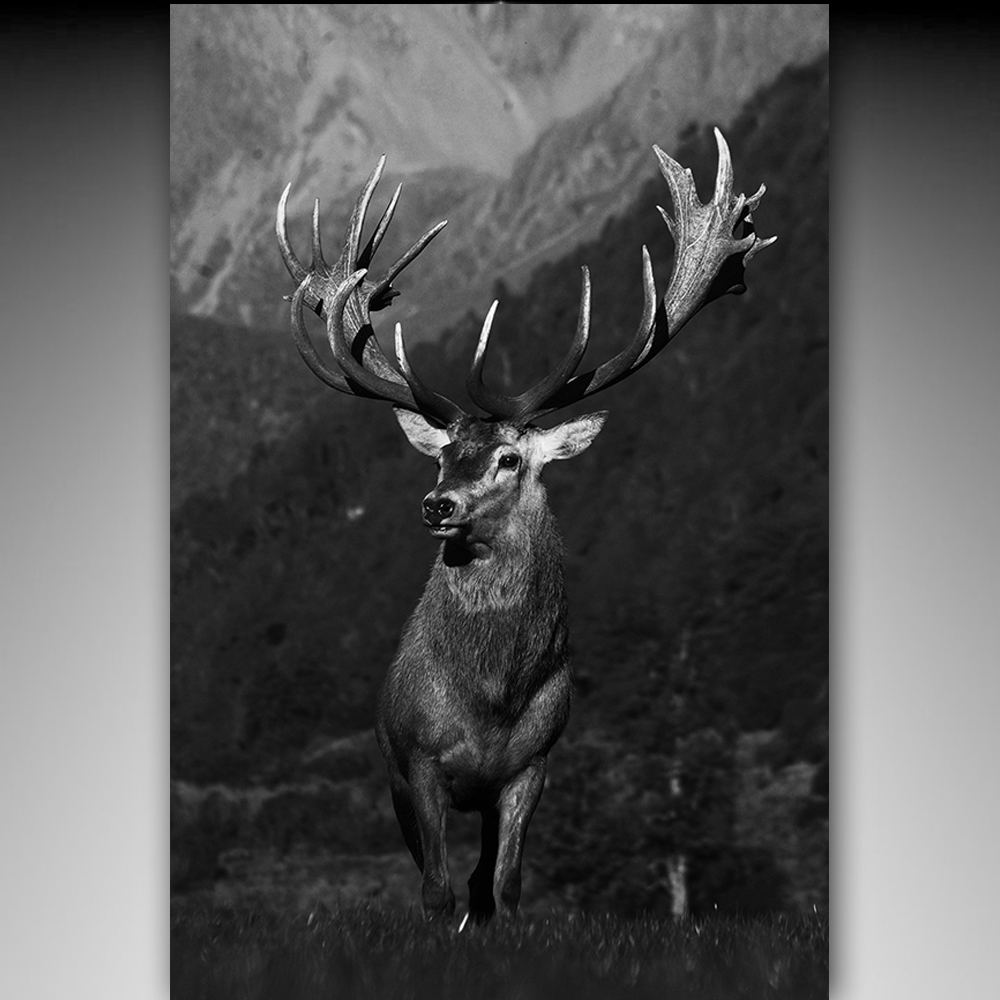 Abstract Animals Canva Prints Wall Art Beautiful Red Deer In Forest Of Animal Oil