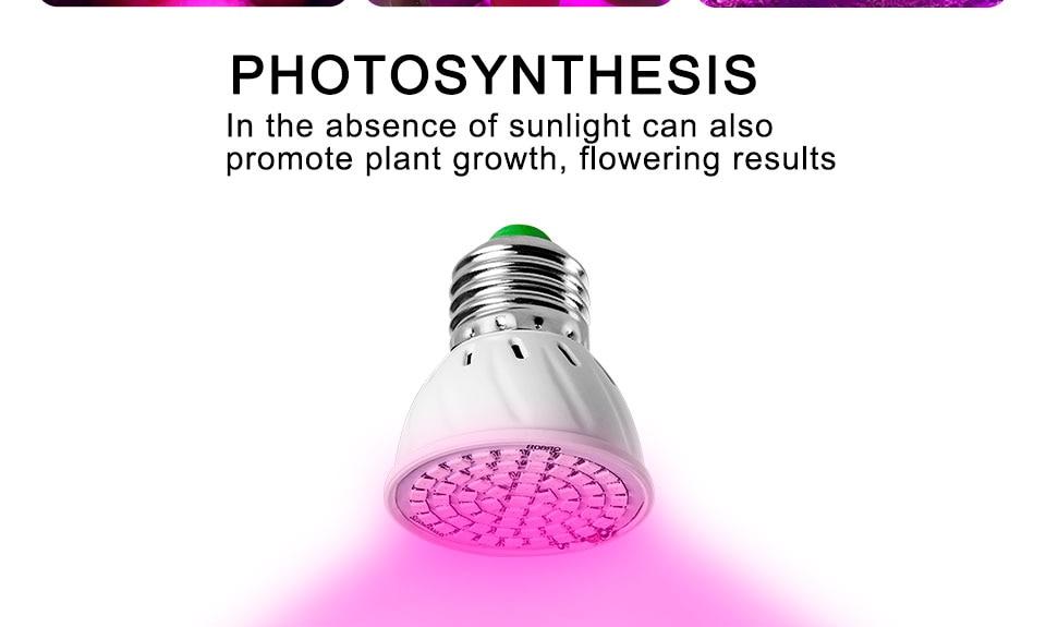 Phyto lamp (5)