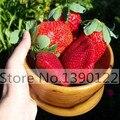 300/saco de Sementes de Morango Gigante, raro, grande como um Pêssego, Fragaria ananassa L. Maximus Morango frutas sementes para jardim de casa