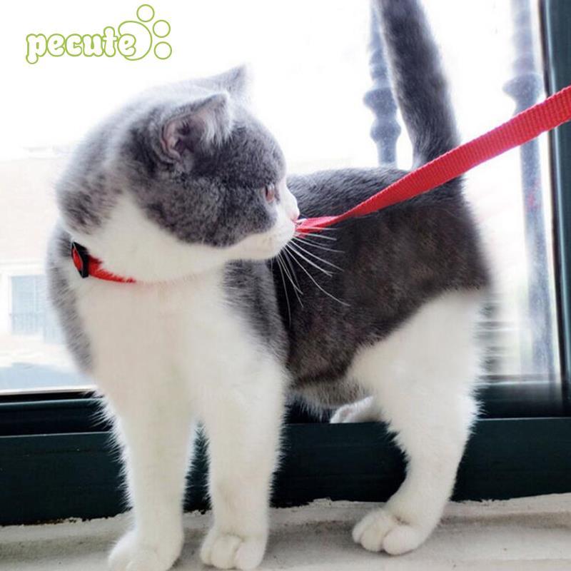 Регулируемый поводок для кошек, ошейник, нейлоновый поводок, поводок для безопасности, трос, товар для животных, ошейник для кошек
