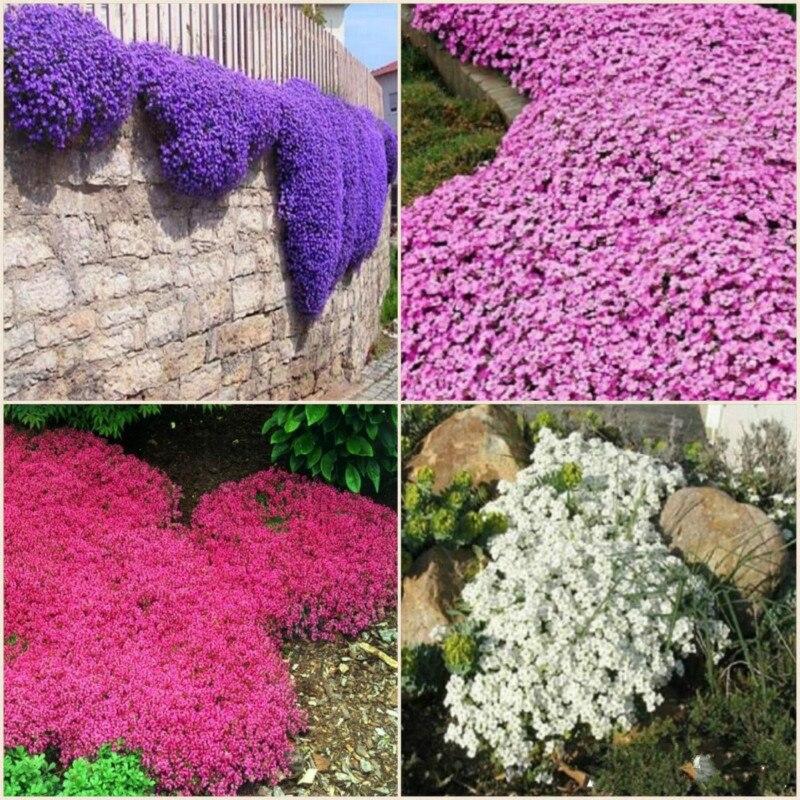 Online Get Cheap Blue Flower Ground Cover