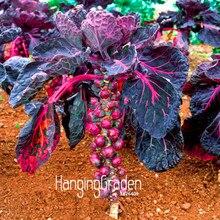 Новинка! фиолетового цвета тысяч-во главе с Капуста бонсай Брюссельская капуста мини-огород подарок* 100 шт./пакет,# DG1WYL