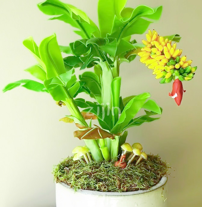 Top 10 Plant Banana Tree Brands And Get Free Shipping