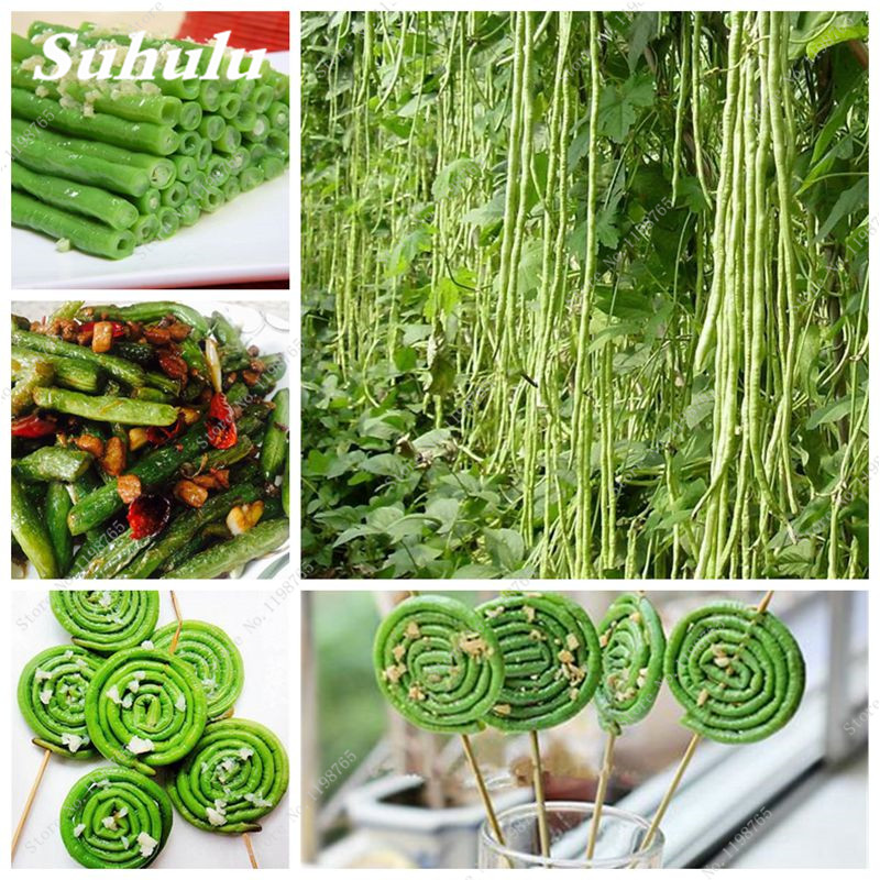 10 Pcs/Bag Green Bean Seeds Long Bean Seeds, - Organic And Fresh - Healthy Vegetable Seeds,Natural Growth For Home Garden ...