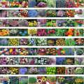 Mezclado 200 semillas/paquete de Primavera y otoño de las cuatro estaciones de flores la letoff paquete de flores bolsa de semillas