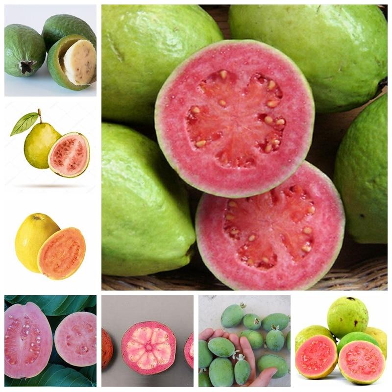 100 Pcs/ Bag Bonsai Guava Fruit Planta Outdoor Bonsai Potted Perennial Juicy Guava Fruta Garden Plant For Flower Pot Planters