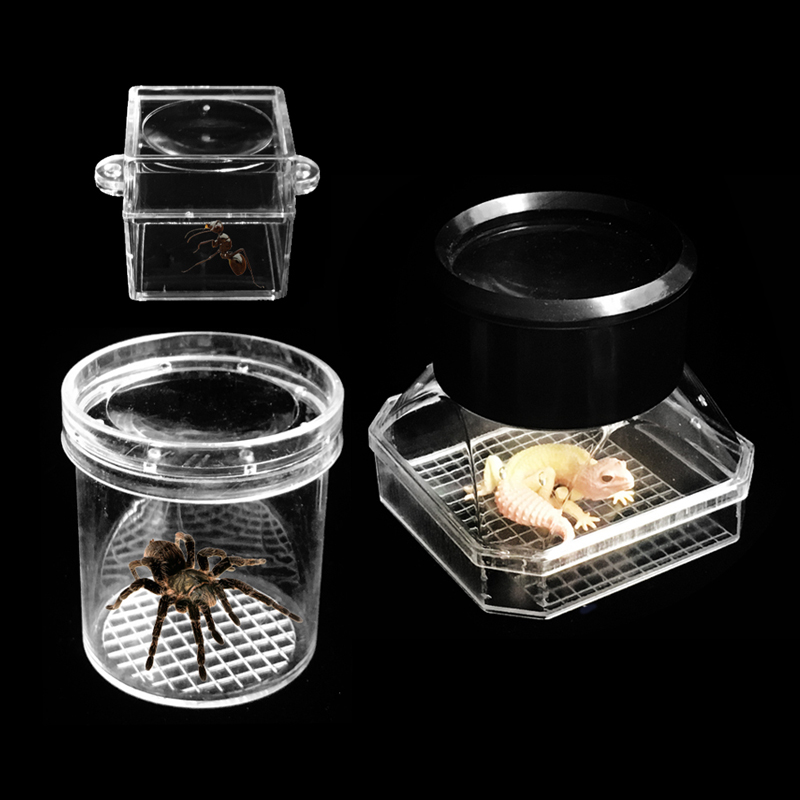 Magnifying Bug Viewer Portable Acrylic Insects Observation magnifying Glass Collecting Viewer Magnifier Children Boys Girl Gift in Magnifiers from Tools