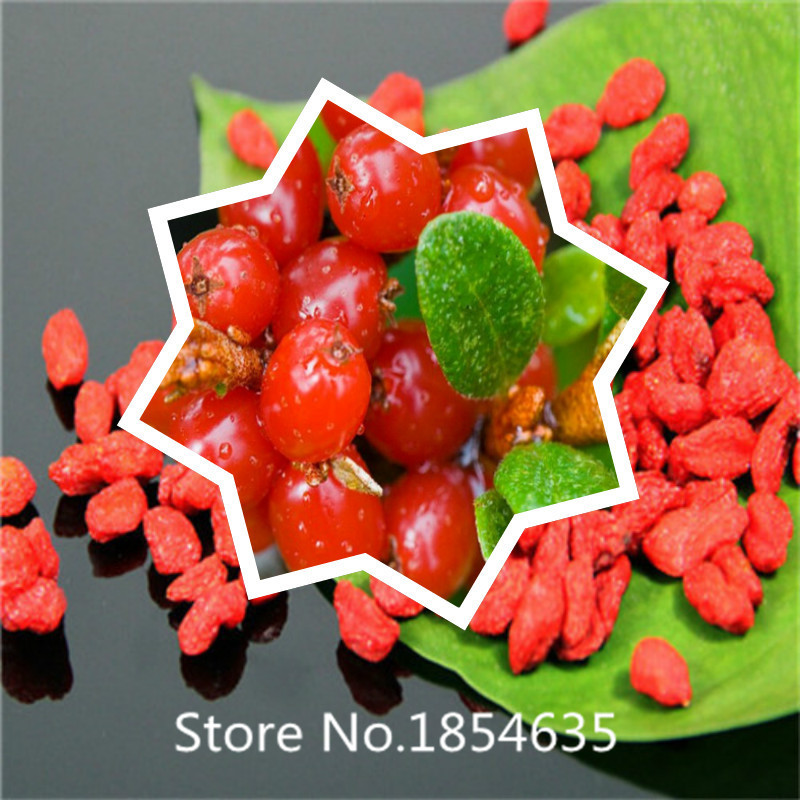 online get cheap goji berry plant aliexpress  alibaba group, Beautiful flower