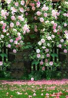 5ft X10ft Vinyl Spring Photography Scenic Backdrops Fond De Studio De Photographie Flower Wedding Studio Photo
