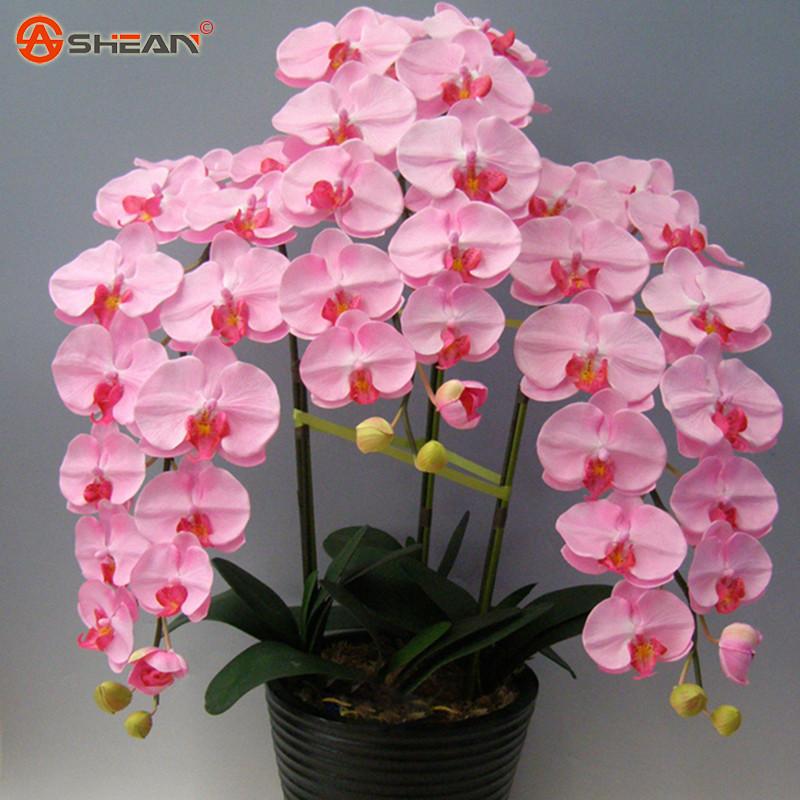 Орхидея семена цветов фото