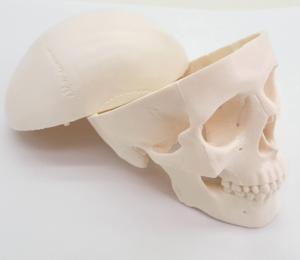 Image 2 - Nhựa PVC Mini Hộp Sọ Của Con Người Về Giải Phẫu Học Giải Phẫu Đầu Y Tế Mô Hình Tiện Lợi Giá Rẻ Và Mỹ