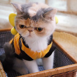Bee Design Costume for Cats & Small Dogs, Pet Costume