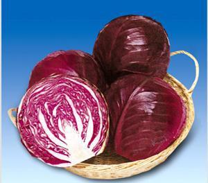 Early purple cabbage seeds selling vegetable seeds 100seed
