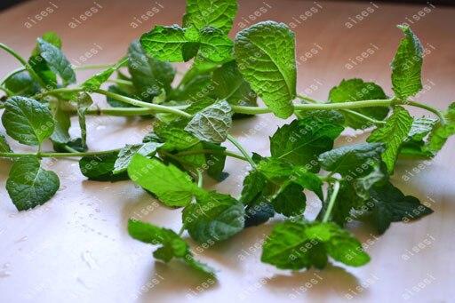 200 peppermint mintSeeds Herb Seeds Rich Aroma DIY Home Garden Plant