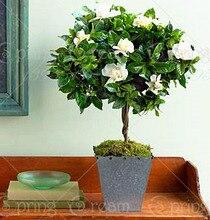 200Pcs Gardenia Cape Jasmine Seeds