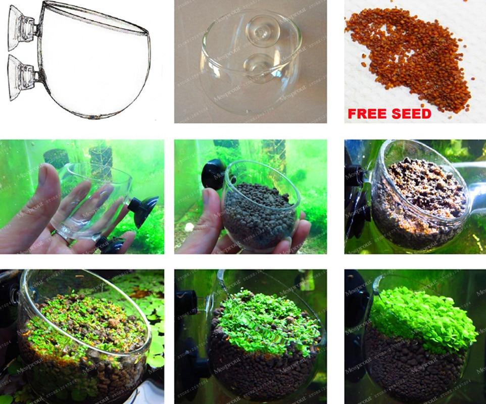 200 Pcs Featured Aquarium Plant Seeds Fish Tank Background Aquatic Plants Seeds Indoor Ornamentals Lanscape For Home Garden