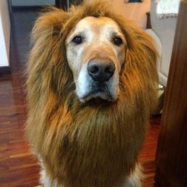 Грива для собак-кошек, одежды кошка фантазии Наряжаться одежда парик Лев Мане