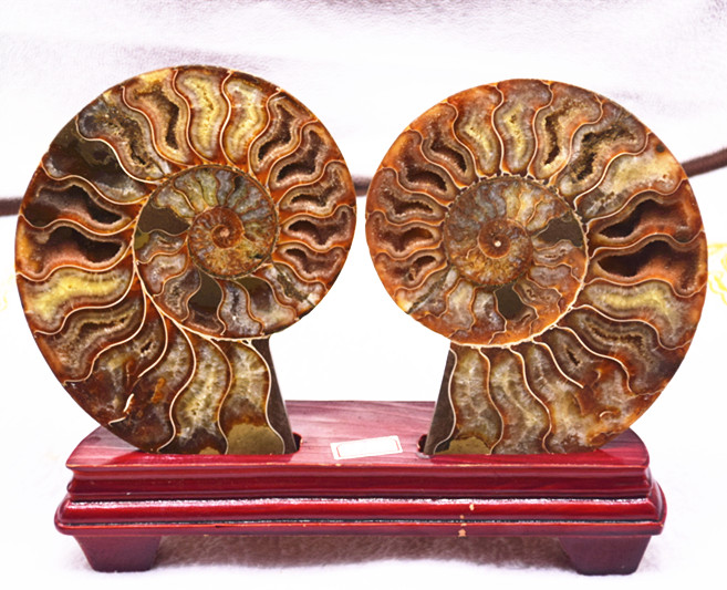 Rare 140mm quartz crystal ammonites natural mineral specimens are shipped free of charge