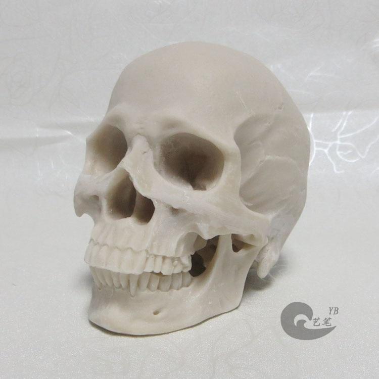 1: 2 weiß harz schädel modell zeichnung schädel eines menschlichen ...