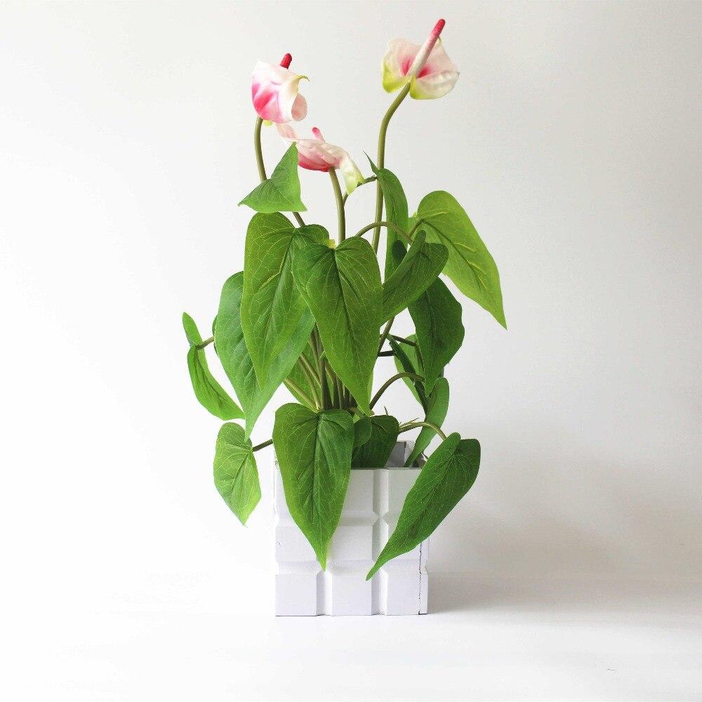 Erkek çiçeği - antoryum