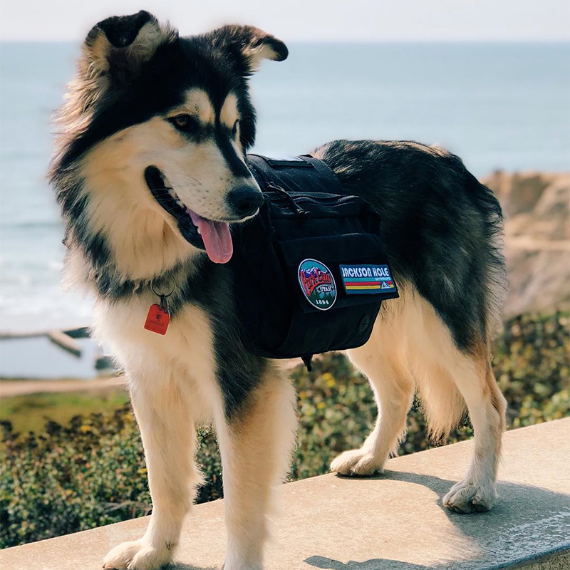 Onetigris Dog-Backpack Hiking-Saddle-Bag Hunting Tactical Large Medium Camping Rucksack